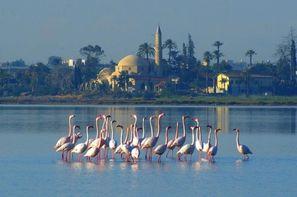 Vacances Larnaca: Autotour Est Ouest