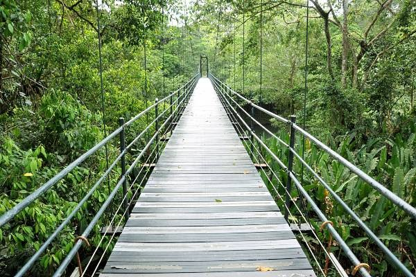 Pont Suspendu Dans La Jungle au Costa Rica