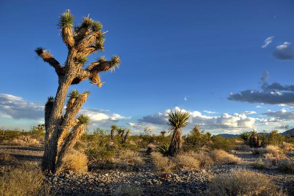 Nature - Autotour Cowboys et Casinos