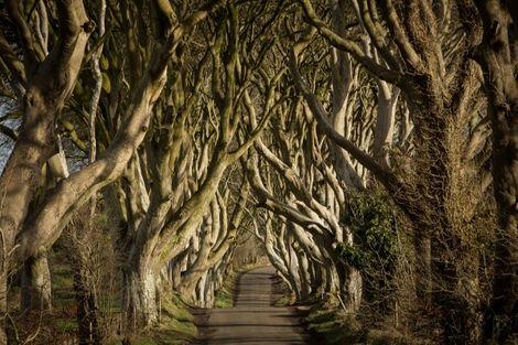 Vacances Transat Irlande