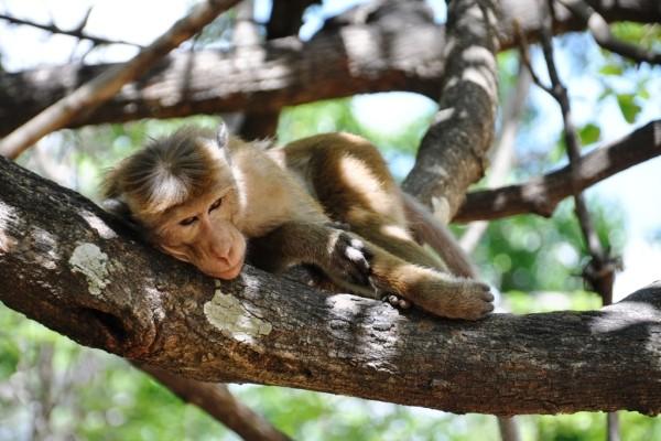 Nature - Autotour Privatif - Sri Lanka en Liberté