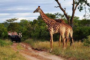 Afrique Du Sud - Johannesbourg, Circuit Impressions d'Afrique du Sud + Chobe + Extensions aux Chutes Victoria