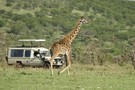 Girafe - Civilisations + Extension Victoria Falls en Afrique du sud