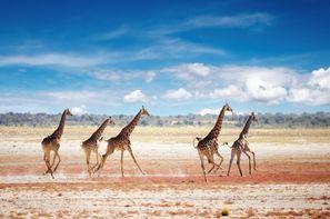 Vacances Le Cap: Circuit Magie de l'Afrique du Sud + ext Chutes Victoria et Parc Chobe