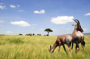 Afrique Du Sud - Le Cap, Circuit Afrique du sud en VO et Hwange et Chutes Victoria