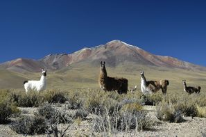 Bolivie-Santa Cruz, Circuit Incontournable de la Bolivie