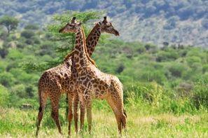 Kenya-Nairobi, Circuit Premiers Regards Kenya & Tanzanie