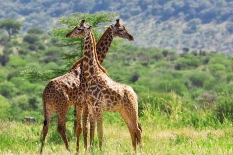 Voyage Kenya