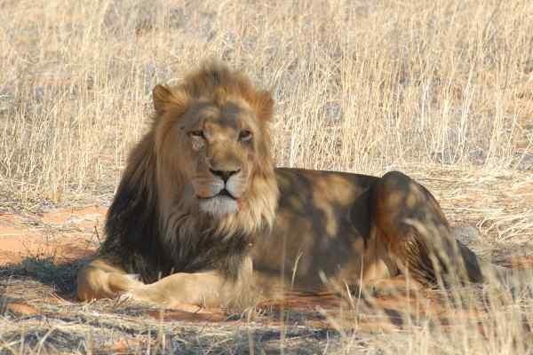 Nature - Circuit La Namibie en V.O.
