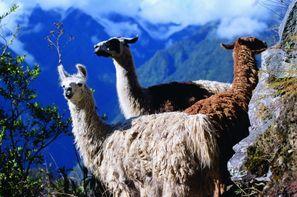 Vacances Lima: Circuit Merveilles du Pérou + extension Amazonie