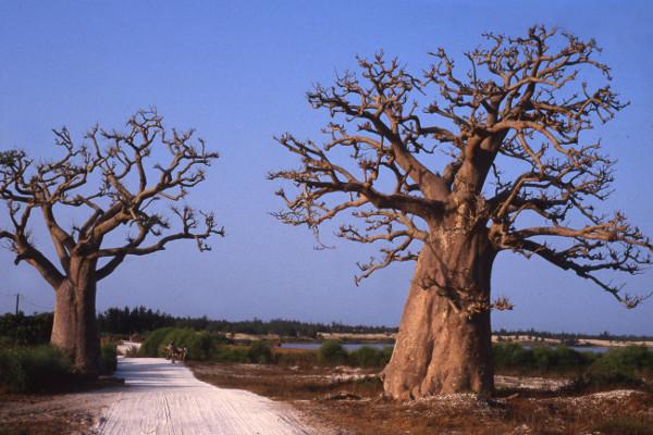 Nature - Circuit Découverte du Sine-Saloum