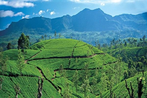 Nature - Circuit Sri Lanka Authentique Privilège 4* et 5*