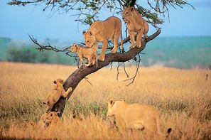 "Vacances Arusha: Circuit Safari ""Magie de la Tanzanie"" - 3 sites UNESCO"