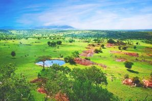 Tanzanie-Kilimanjaro, Circuit Safari Swala