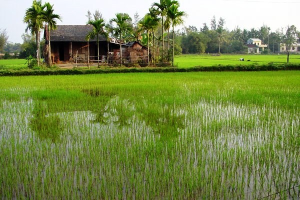Nature - Circuit De la baie d'Halong au delta du Mékong