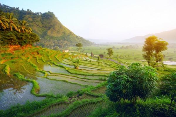 Nature - Combiné circuit et hôtel Splendeurs de Bali & Extension Balnéaire à Tanjung Benoa