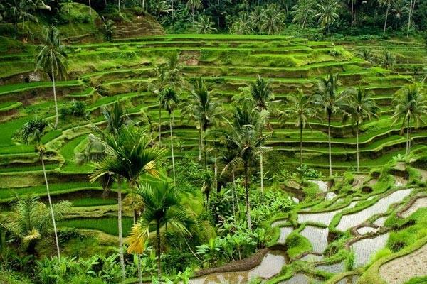 Nature - Combiné circuit et hôtel Soleil de Bali et ses plages 5*