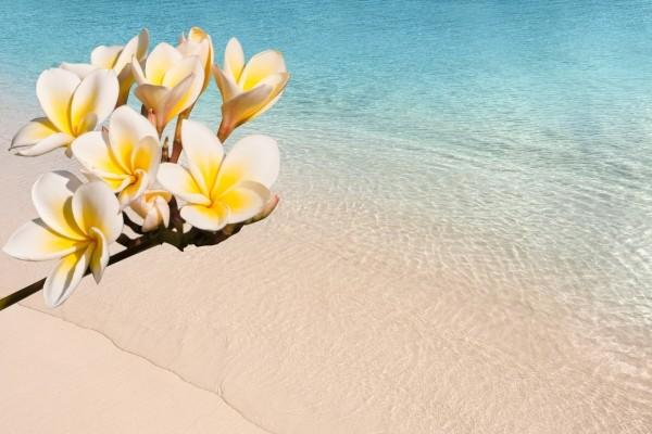Nature - Croisière La Magie des Caraïbes - Costa Magica 5*