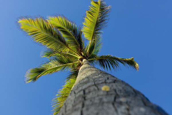 Nature - Croisière Perles des Antilles - Costa Favolosa 5*