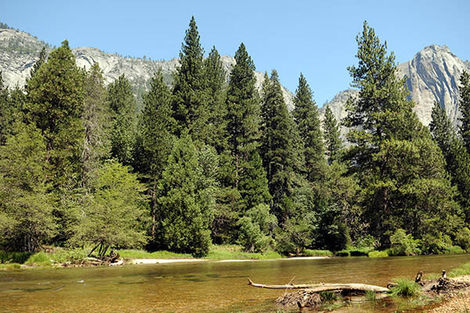 Yosemite (Parc National) aux Etats-Unis