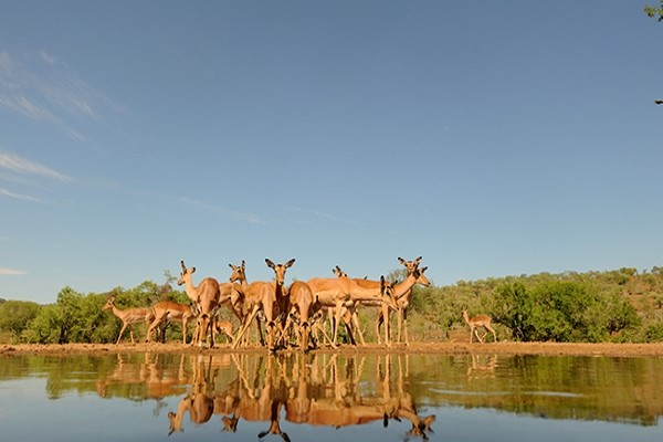 (fictif) - Autotour Charmes d'Afrique du Sud Le Cap Afrique Du Sud
