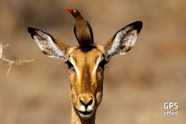 animal - oiseau