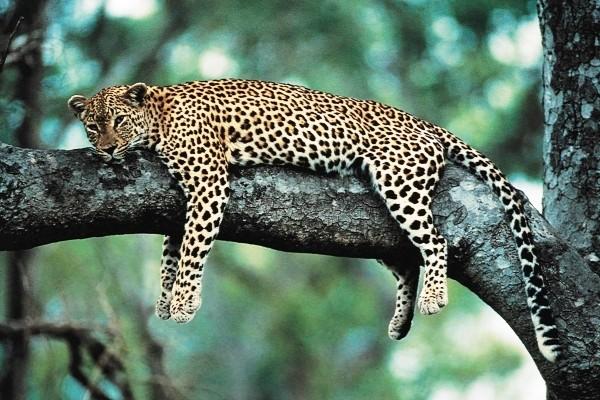 Nature - Autotour L'Afrique Du Sud En Famille Le Cap Afrique Du Sud