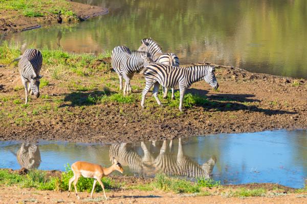 Parc - Autotour Charmes d'Afrique du Sud Le Cap Afrique Du Sud