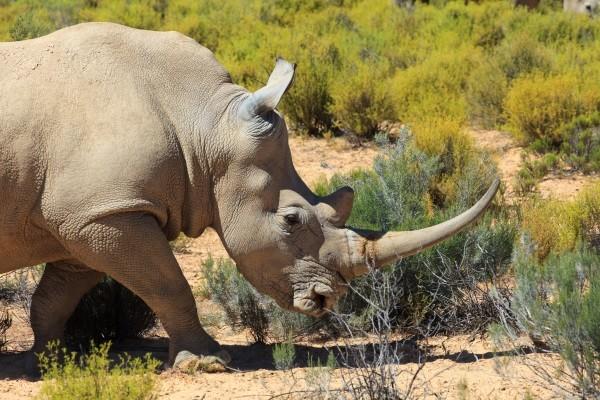 Nature - Autotour Charmes d'Afrique du Sud Le Cap Afrique Du Sud