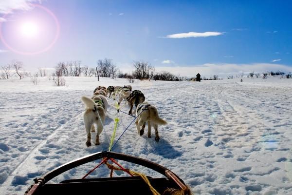 Traîneaux à chiens - Montréal - Mauricie - Québec : Auberge Eco-Nature