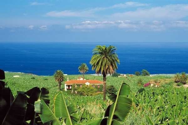 Nature - Autotour Pack Liberté Hôtel Vincci Tenerife 4* Tenerife Canaries