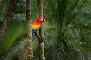 Costa Rica-San jose, Autotour Costa Rica Pura Vida