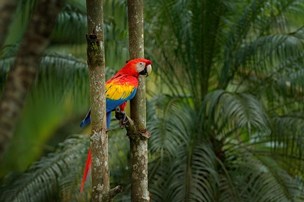Nature - Autotour Costa Rica Pura Vida San jose Costa Rica