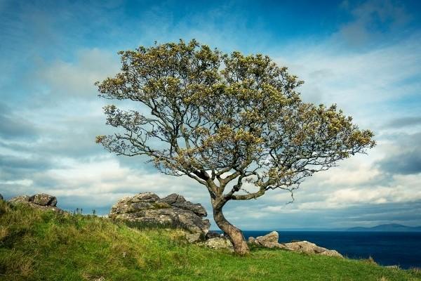 Nature - Autotour King & Kinsmen Dublin Irlande