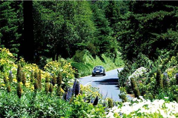 Nature - Autotour Sous le Charme de Madère Funchal Madère