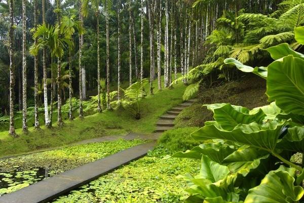 Nature - Autotour Martinique en liberté 3* Fort De France Martinique