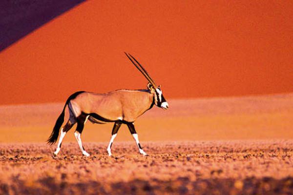 (fictif) - Autotour Dunes & Déserts de Namibie + Fish River & Kalahari Windhoek Namibie