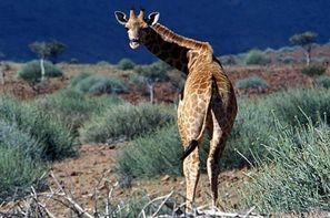 Namibie-Windhoek, Autotour Dunes & Déserts de Namibie + Fish River & Kalahari