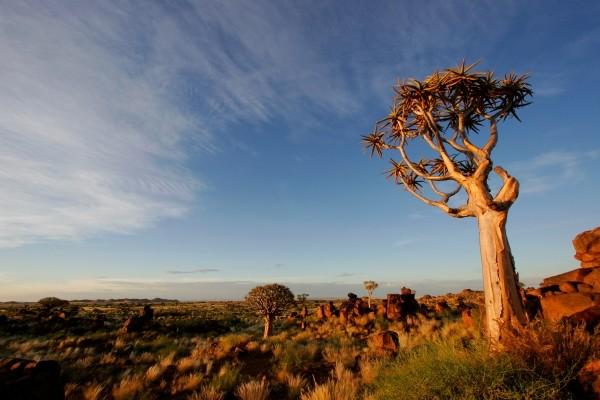 (fictif) - Circuit Civilisations + Extensions Parcs Chobe + Victoria Falls 4* Johannesbourg Afrique Du Sud