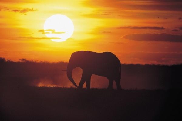 Nature - Circuit Civilisations + Extension Mozambique Johannesbourg Afrique Du Sud