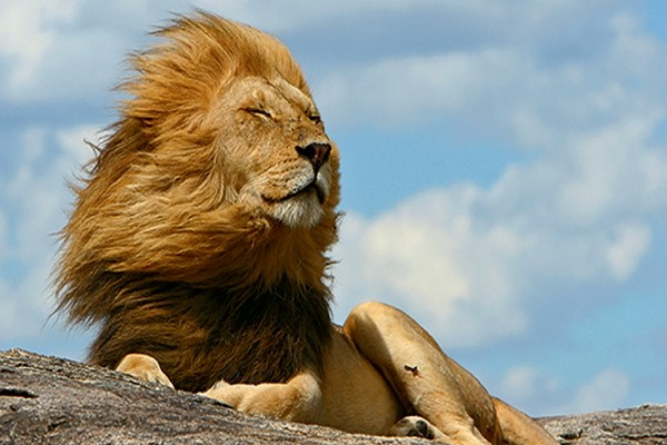 Lion - Lumières d'Afrique du Sud + Extension Chutes Victoria