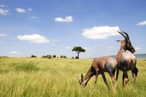 Afrique Du Sud-Le Cap, Circuit Paysages Sud-Africains + extension aux Chutes Victoria