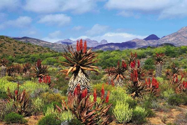Nature - Circuit Les incontournables de l'Afrique du Sud avec Victoria falls 3* Le Cap Afrique Du Sud