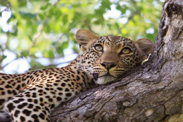 Nature - Circuit I love Afrique du Sud Le Cap Afrique Du Sud