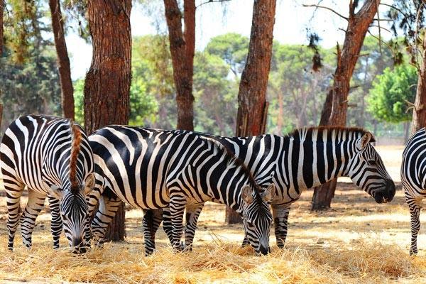 Nature - Circuit I love Afrique du Sud + ext Chutes Victoria Le Cap Afrique Du Sud