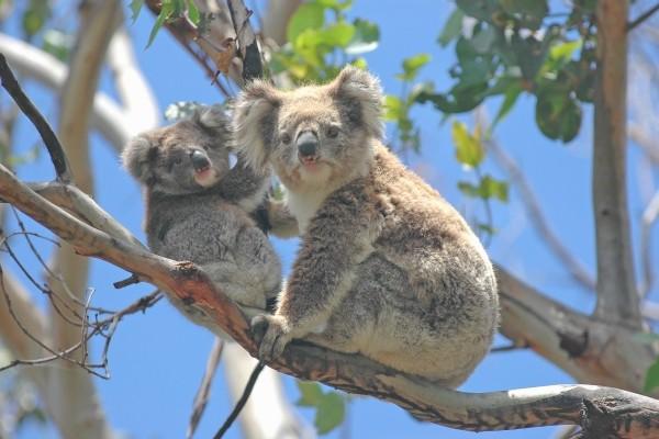 Nature - Circuit Pré-voyage Melbourne & Splendeurs d'Australie Melbourne Australie