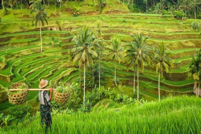 Bali : Circuit Merveilles de Bali
