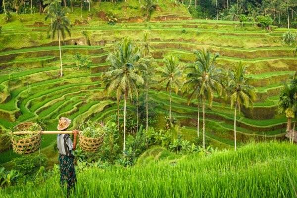 Nature - Circuit Merveilles de Bali