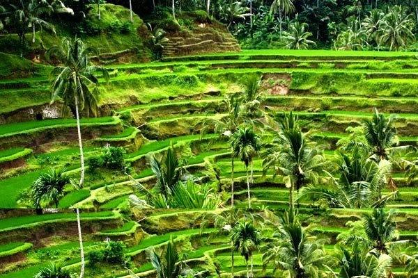 Nature - Circuit Les Merveilles de Bali 4*