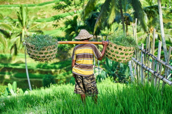 Nature - Jardin d'Eden 3* charme & séjour à Kuta au Fontana 4* Denpasar Bali